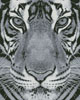 Bengal Tiger (Black and White) - Cross Stitch Chart