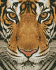 Bengal Tiger (Colour) - Cross Stitch Chart