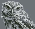 Black and White Owl - Cross Stitch Chart