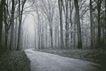Black and White Road through Trees - Cross Stitch Chart