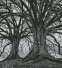Branching Out - Black and White (Crop) - Cross Stitch Chart