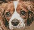 Cavalier King Charles - Cross Stitch Chart