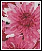 Chrysanthemums Card - Cross Stitch Card