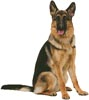 German Shepherd Sitting - Cross Stitch Chart