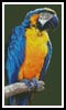 Macaw - Cross Stitch Chart