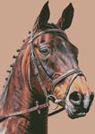Horse Portrait - Cross Stitch Chart