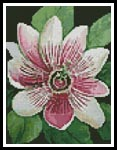 Mini Passion Flower - Cross Stitch Chart