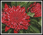 Mini Waratah - Cross Stitch Chart
