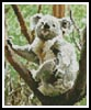 Mini Koala Scratch - Cross Stitch Chart