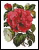 Mini Pink Camellia - Cross Stitch Chart