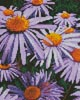 Mini Purple Daisies - Cross Stitch Chart