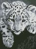 Mini Snow Leopard Cub - Cross Stitch Chart