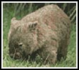 Mini Wombat - Cross Stitch Chart