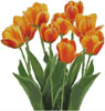 Orange Tulips - Cross Stitch Chart