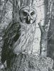 Owl Photo Black and White - Cross Stitch Chart