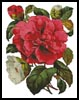 Pink Camellia - Cross Stitch Chart