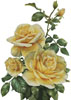 Pretty Yellow Roses - Cross Stitch Chart