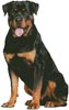 Rottweiler Sitting - Cross Stitch Chart