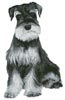 Silver Schnauzer - Cross Stitch Chart