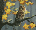 Tawny Owl (Crop) - Cross Stitch Chart