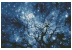 Tree Silhouette against Starry Night - Cross Stitch Chart