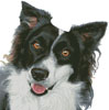 Border Collie Painting - Cross Stitch Chart